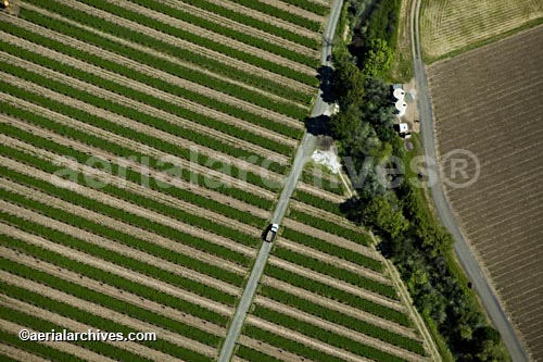 &copy aerialarchives.com Sonoma County vineyard, CA Aerial View,  AHLB2165