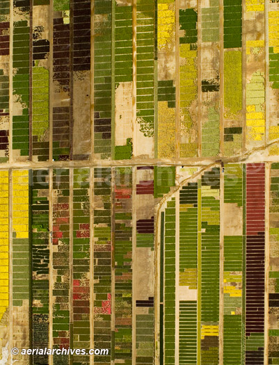 Aerialarchives Aerial Photograph California Agriculture Flower Farm In Fairfield CA
